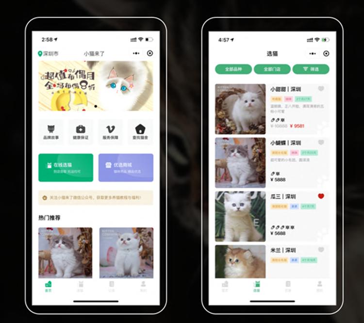 小猫来了:从活体切入千亿宠物猫赛道,如何做宠物行业数字化开拓者