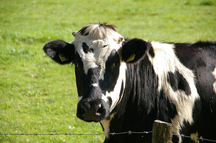 原奶周期与伊利、蒙牛的兼并战争