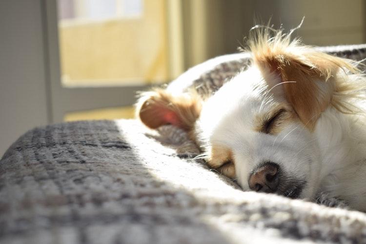 宠物智能家居品牌CATLINK完成首轮融资,携新瑞鹏共创健康养宠智能生态